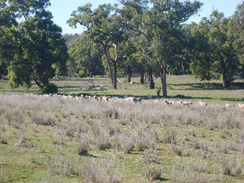 Property For Sold Mendooran 2842 NSW 9