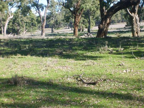 Property For Sold Mendooran 2842 NSW 11