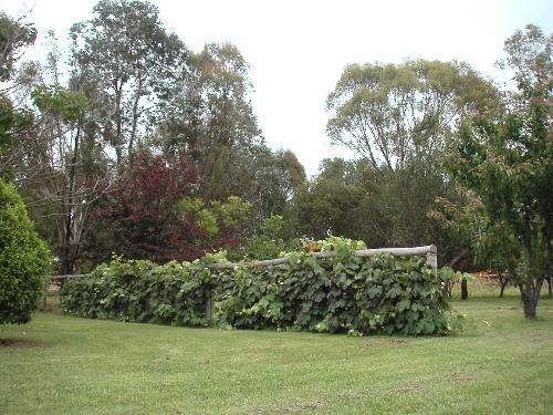Property For Sold Glen Innes 2370 NSW 4