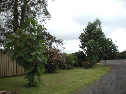 Property For Sold Glen Innes 2370 NSW 7