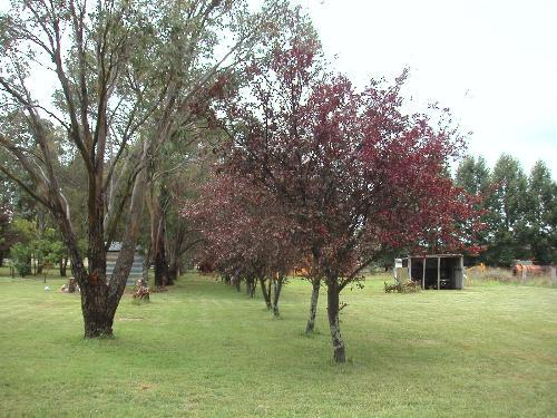 Property For Sold Glen Innes 2370 NSW 9