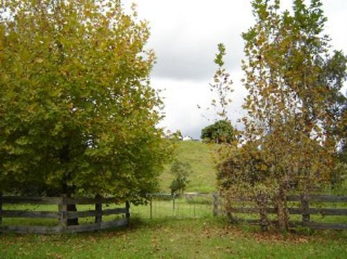 Property For Sale Kyogle 2474 NSW 9
