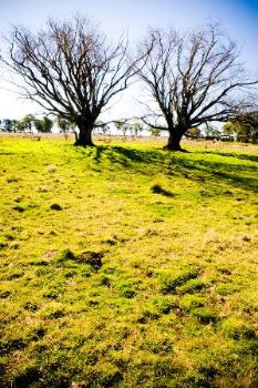 Property For Sale Millthorpe 2798 NSW 5