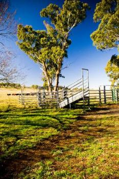 Property For Sale Millthorpe 2798 NSW 7