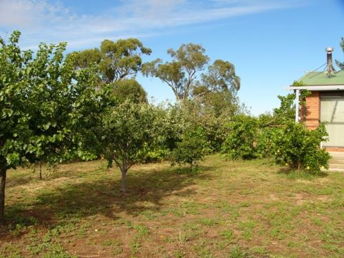Property For Sold Cootamundra 2590 NSW 7