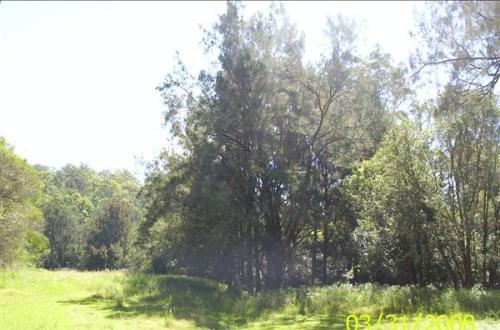 Property For Sold Kyogle 2474 NSW 9