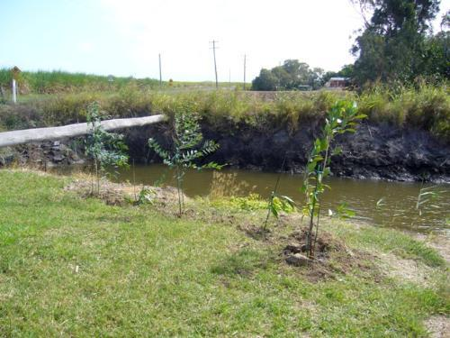 Property For Sale Ballina South 2478 NSW 7