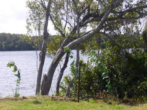 Property For Sale Ballina South 2478 NSW 8