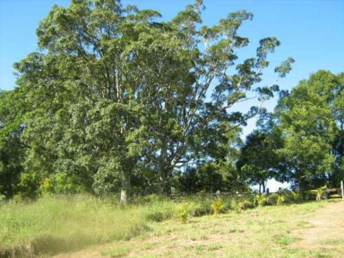 Property For Sold Nimbin 2480 NSW 11
