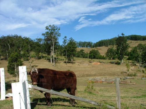 Property For Sold Wauchope 2446 NSW 9