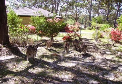 Property For Sold Urunga 2455 NSW 4