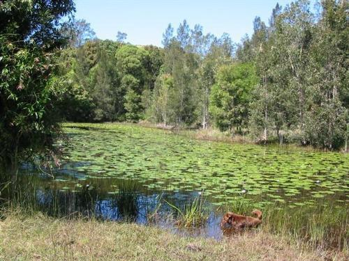 Property For Sale Coffs Harbour 2450 NSW 11