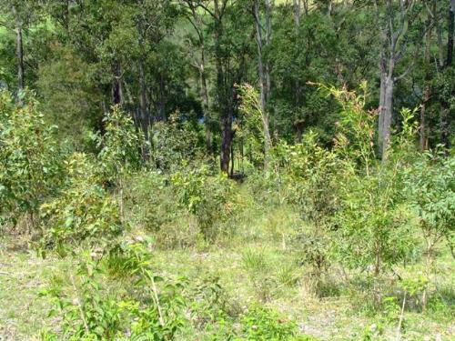 Property For Sold Bulahdelah 2423 NSW 5