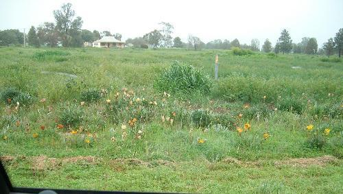 Property For Sale Lot 176 Boree St Grong Grong NSW 2652 3