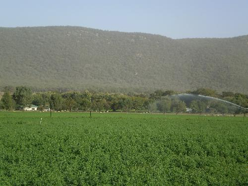 Property For Sold Tamworth 2340 NSW 8