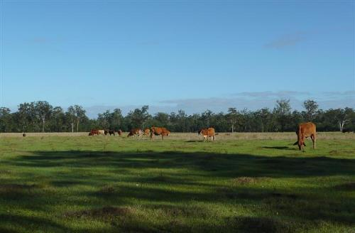 Property For Sold Whiporie 2469 NSW 5