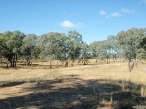 Property For Sale Coonabarabran 2357 NSW 3