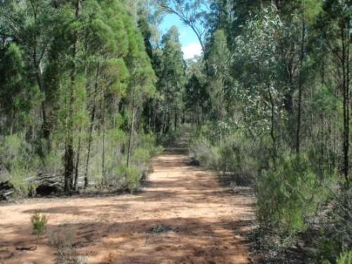Property For Sale Coonabarabran 2357 NSW 5