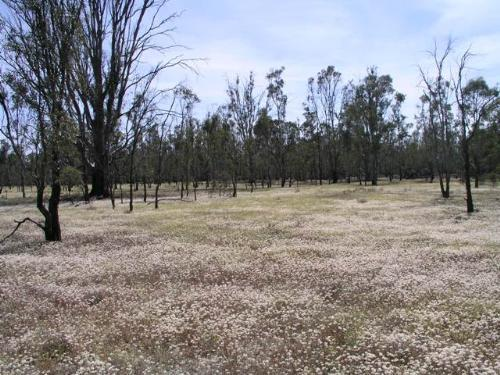 Property For Sold Barham 2732 NSW 2