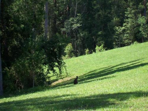 Property For Sold Valla 2448 NSW 7