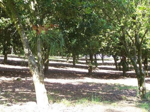 Property For Sold Valla 2448 NSW 8