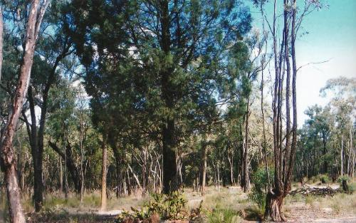 Property For Sold Coonabarabran 2357 NSW 2