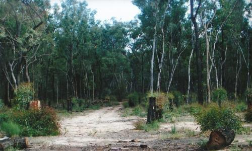 Property For Sold Coonabarabran 2357 NSW 3