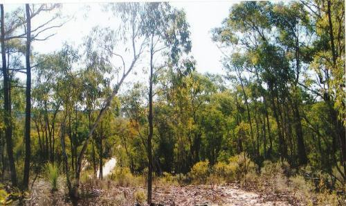 Property For Sold Coonabarabran 2357 NSW 4