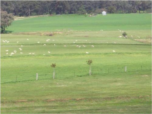 Property For Sold Cowra 2794 NSW 3