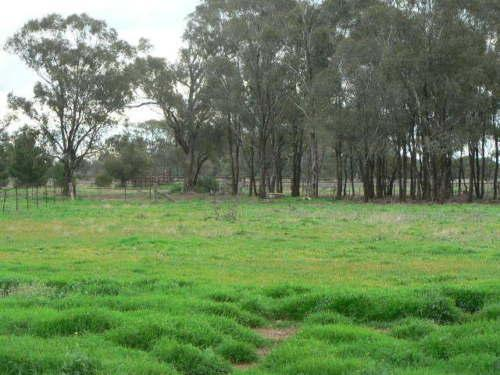 Property For Sold Ungarie 2669 NSW 3