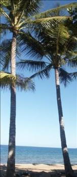 Property For Sale Wonga Beach 4873 QLD 2