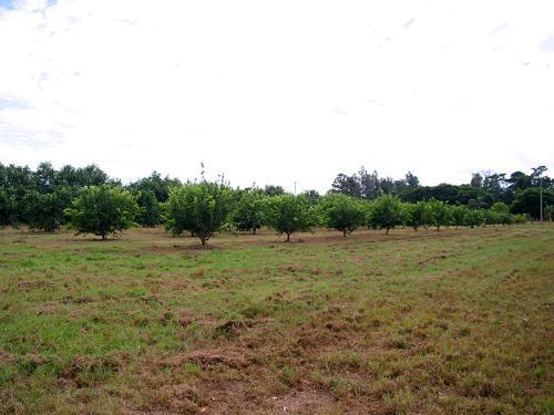 Property For Sold Cooktown 4871 QLD 11