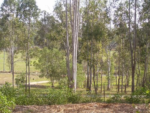 Property For Sale Mundoolun 4285 QLD 9