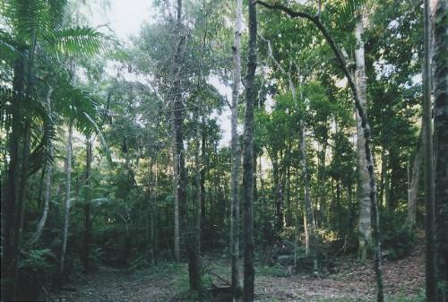 Property For Sale Maleny 4552 QLD 10