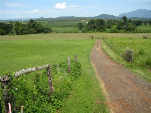 Property For Sale Innisfail 4860 QLD 8