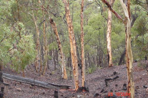 Property For Sale Chittering 6084 WA 3
